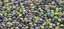 El mercado del Olivar y sus sabores